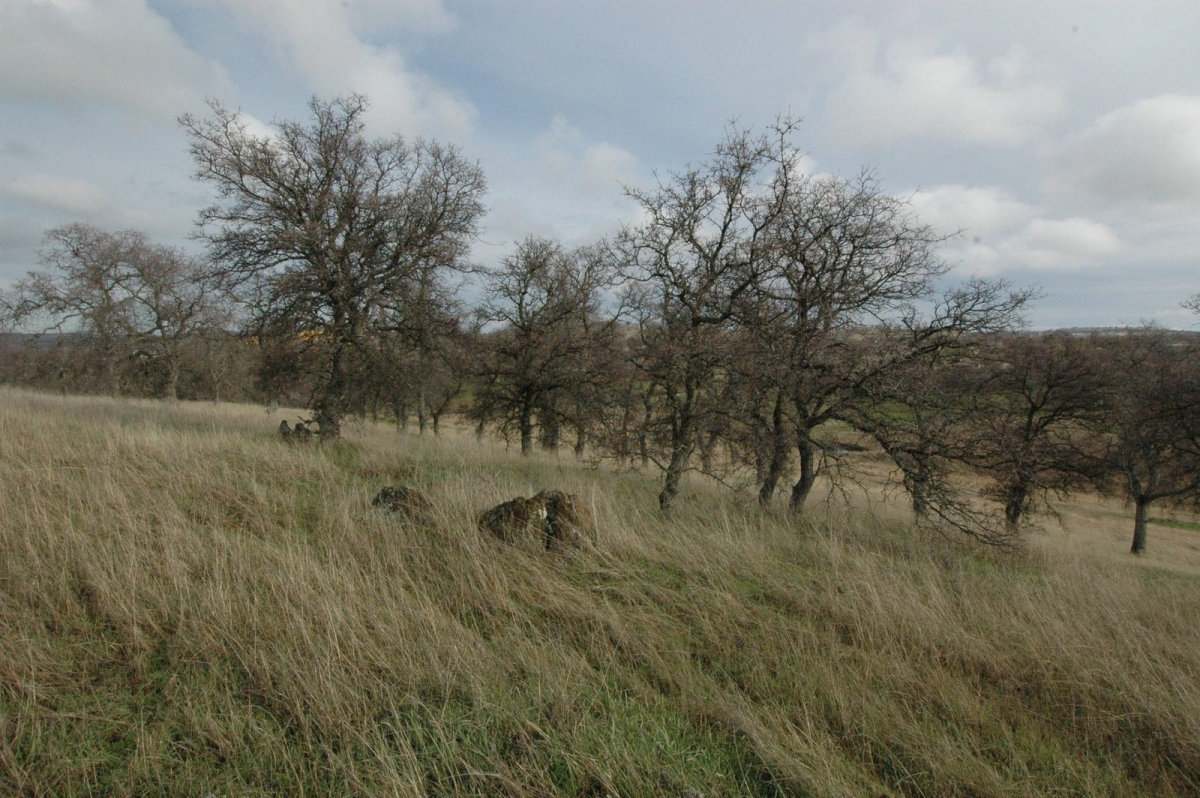 beautiful 5 1 acre lot   lake don pedro realty
